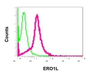 Flow Cytometry - Anti-ERO1L antibody [EPR12475(B)] (ab172954)