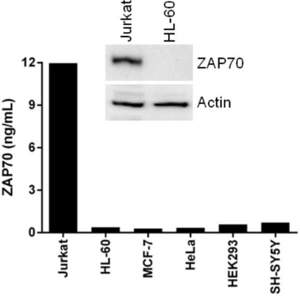 Comparison of ZAP70 expression in different cell lines using this  ELISA (barchart) and western blot (top).