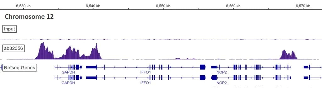 ChIP-sequencing - Anti-Histone H3 (di methyl K4) antibody [Y47] - BSA and Azide free (ab173324)
