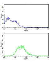 Flow Cytometry - Anti-ATG14L antibody - N-terminal (ab173943)