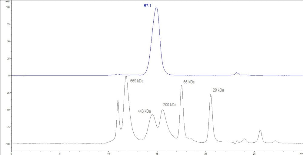 HPLC - Recombinant human CD80 protein (ab173993)