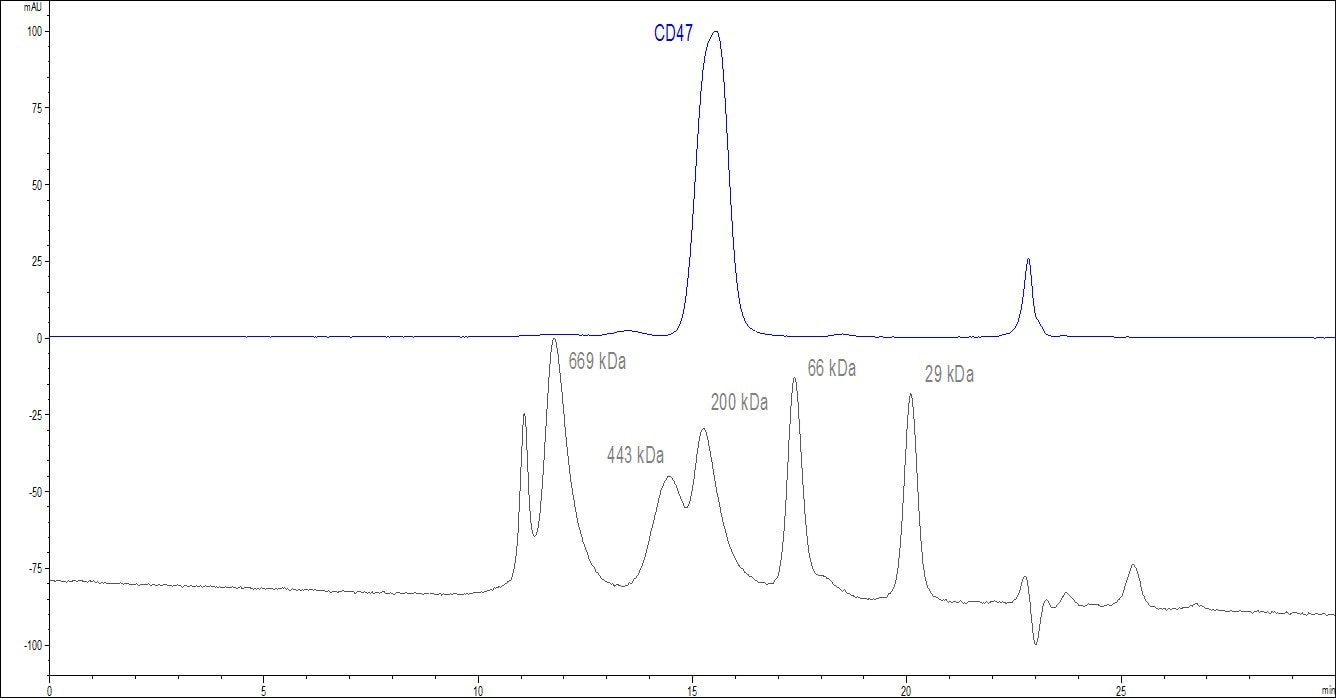 Functional Studies - Recombinant human CD47 protein (Active) (ab174029)