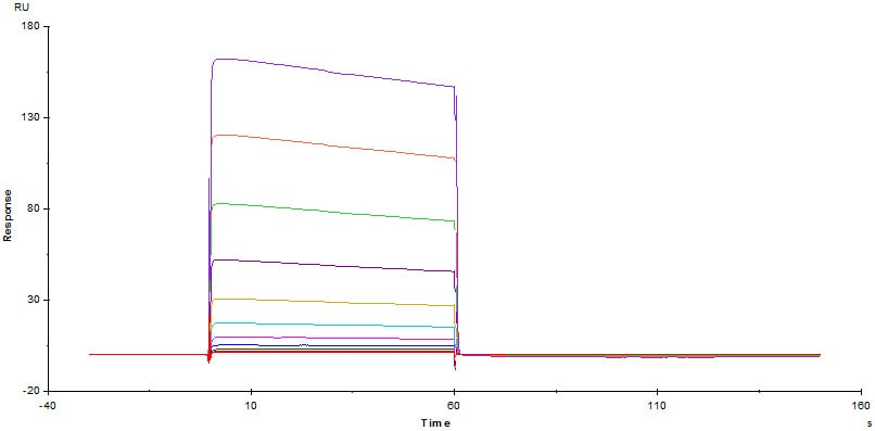 Functional Studies - Recombinant human CD32B protein (ab174051)