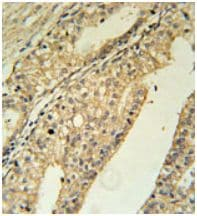 Immunohistochemistry (Formalin/PFA-fixed paraffin-embedded sections) - Anti-TMEM134 antibody - N-terminal (ab174246)