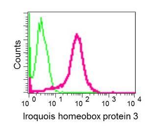 Flow Cytometry (Intracellular) - Anti-Iroquois homeobox protein 3/IRX3 antibody [EPR12124] (ab174307)