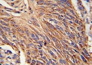 Immunohistochemistry (Formalin/PFA-fixed paraffin-embedded sections) - Anti-RDH10 antibody (ab174340)