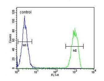 Flow Cytometry - Anti-MCM-BP antibody - N-terminal (ab174343)