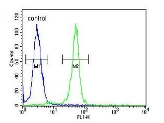 Flow Cytometry - Anti-RRS1 antibody - C-terminal (ab174350)