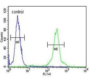 Flow Cytometry - Anti-GLT8D2 antibody - N-terminal (ab174361)