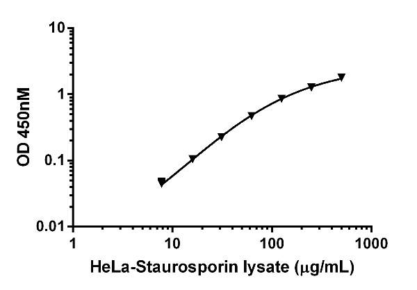 Example of HeLa Staurosporine (ab120056) treated cell lysate titration.