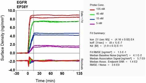 OI-RD Scanning - Anti-EGFR antibody [EP38Y] - Low endotoxin, Azide free (ab174481)