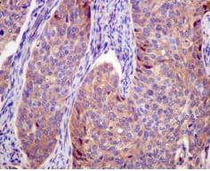 Immunohistochemistry (Formalin/PFA-fixed paraffin-embedded sections) - Anti-TRAFD1 [EPR12322] antibody (ab174853)