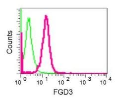 Flow Cytometry - Anti-FGD3 antibody [EPR12448] (ab174857)