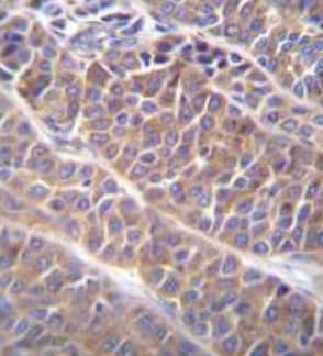 Immunohistochemistry (Formalin/PFA-fixed paraffin-embedded sections) - Anti-SHC4 antibody - N-terminal (ab174908)
