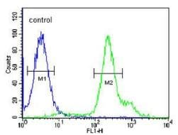 Flow Cytometry - Anti-RBM24 antibody - N-terminal (ab174919)