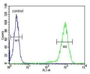 Flow Cytometry - Anti-ST8SiaIII antibody - Conformation-Specific (ab174958)