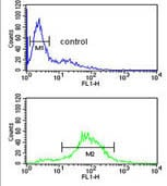 Flow Cytometry - Anti-BTBD9 antibody (ab174976)