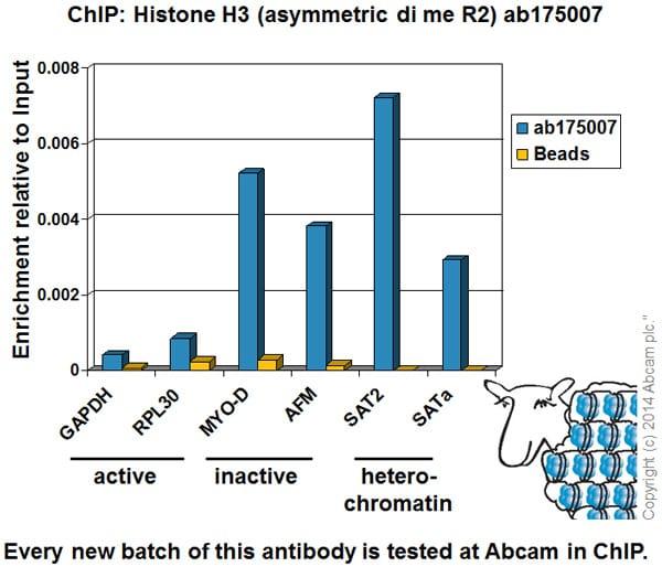 ChIP - Anti-Histone H3 (asymmetric di methyl R2) antibody - ChIP Grade (ab175007)