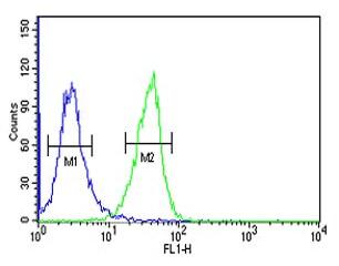 Flow Cytometry - Anti-INO80B antibody (ab175117)