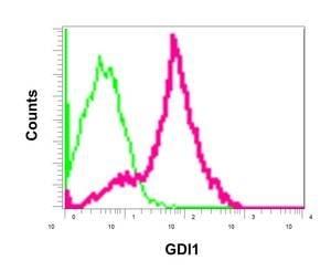 Flow Cytometry - Anti-GDI1 antibody [EPR13196(B)] (ab175194)