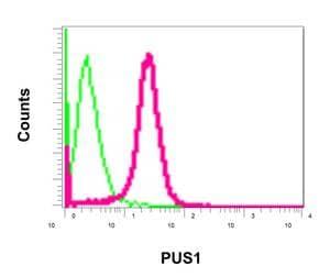Flow Cytometry - Anti-PUS1 antibody [EPR13235(B)] (ab175240)