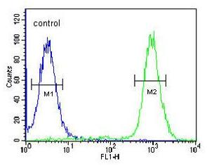 Flow Cytometry - Anti-WDR11 antibody (ab175256)