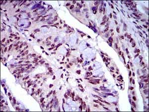 Immunohistochemistry (Formalin/PFA-fixed paraffin-embedded sections) - Anti-NAPSIN A antibody [10C4B8] (ab175426)
