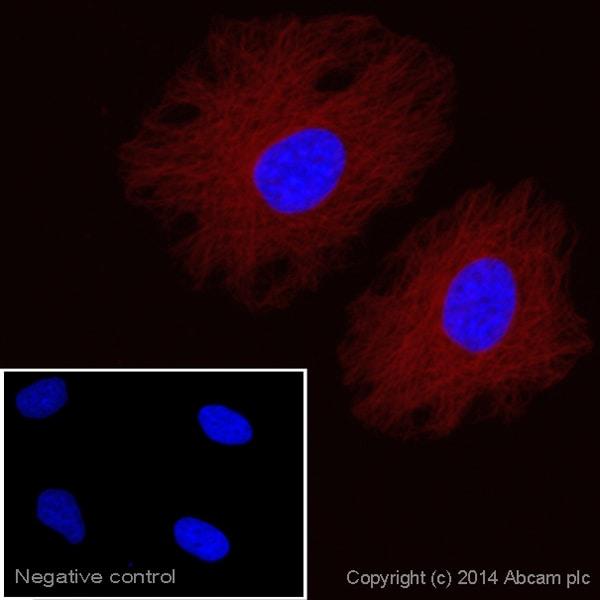 Immunocytochemistry/ Immunofluorescence - Rabbit Anti-Goat IgG H&L (Alexa Fluor® 750) preadsorbed (ab175748)