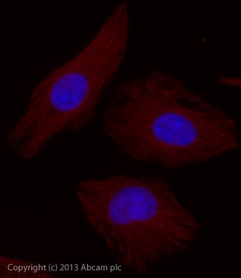 Immunocytochemistry/ Immunofluorescence - Rabbit F(ab')2 Anti-Mouse IgG H&L (Alexa Fluor® 750) (ab175762)