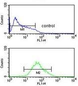 Flow Cytometry - Anti-ADCY8 antibody (ab175874)
