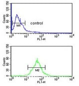 Flow Cytometry - Anti-TFPT antibody - N-terminal (ab176167)