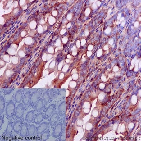 Immunohistochemistry (Formalin/PFA-fixed paraffin-embedded sections) - Anti-Cdk2 (phospho Y15) antibody [EPR2233Y] - BSA and Azide free (ab176312)