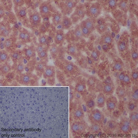 Immunohistochemistry (Formalin/PFA-fixed paraffin-embedded sections) - Anti-KDEL antibody [EPR12668] (ab176333)