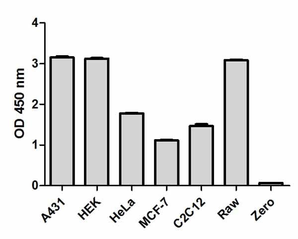 Comparison of total ERK1/2  expression in different cell lines