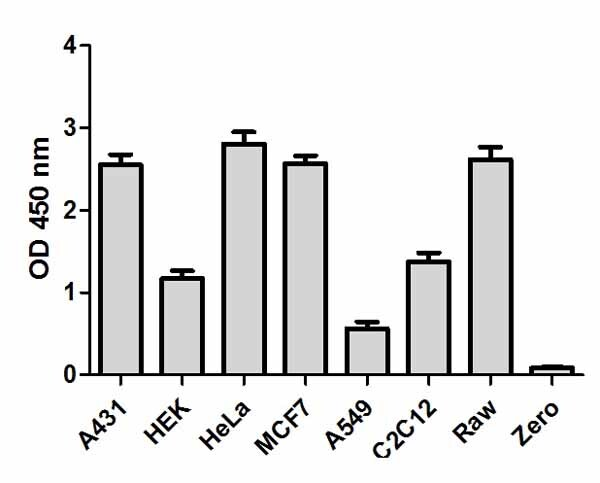 Comparison of total I?Ba expression in different cell lines