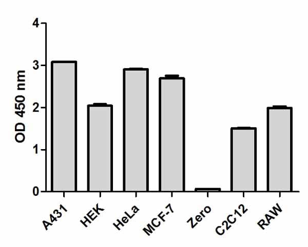Comparison of NF?B p65 expression in different cell lines