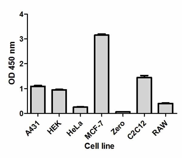 Comparison of p70S6K (pT389) expression in different cell lines