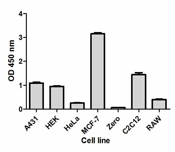 Comparison of Total p70S6K expression in different cell lines