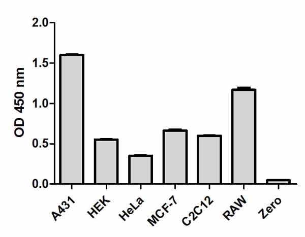 Comparison of CREB1 expression in different cell lines