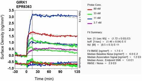 OI-RD Scanning - Anti-GIRK1 antibody [EPR6363] - BSA and Azide free (ab176720)