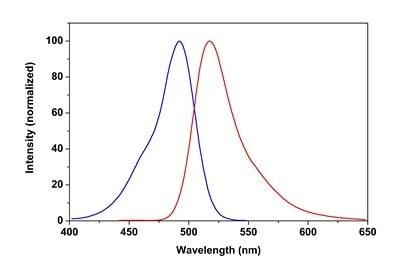 CytoPainter Phalloidin-iFluor 488 Reagent (ab176753)