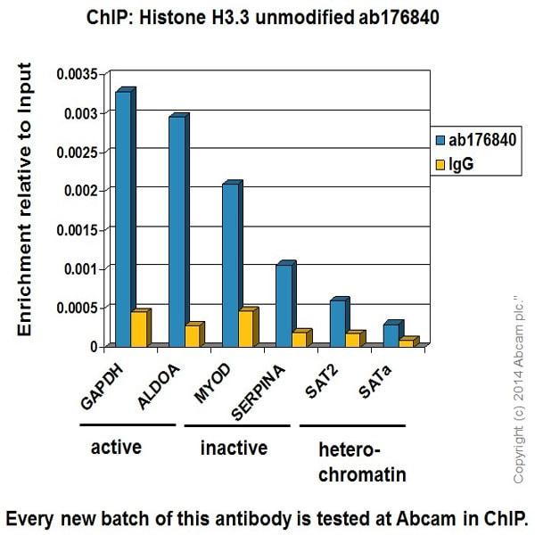 ChIP - Anti-Histone H3.3 antibody [EPR17899] - ChIP Grade (ab176840)