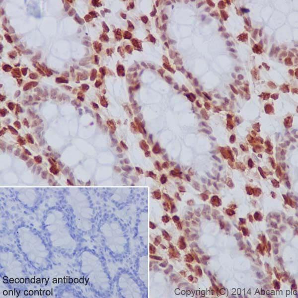 Immunohistochemistry (Formalin/PFA-fixed paraffin-embedded sections) - Anti-Histone H3.3 antibody [EPR17899] - ChIP Grade (ab176840)
