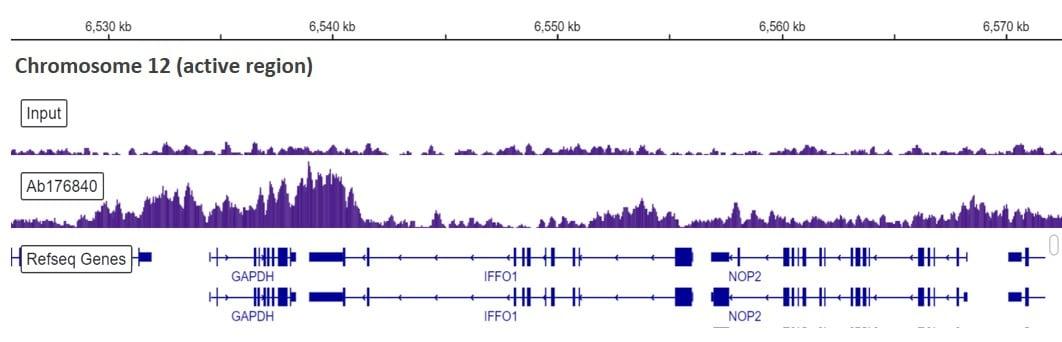 ChIP-sequencing - Anti-Histone H3.3 antibody [EPR17899] - ChIP Grade (ab176840)