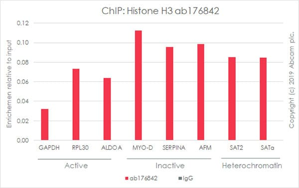 ChIP - Anti-Histone H3 antibody [EPR16987] - ChIP Grade (ab176842)