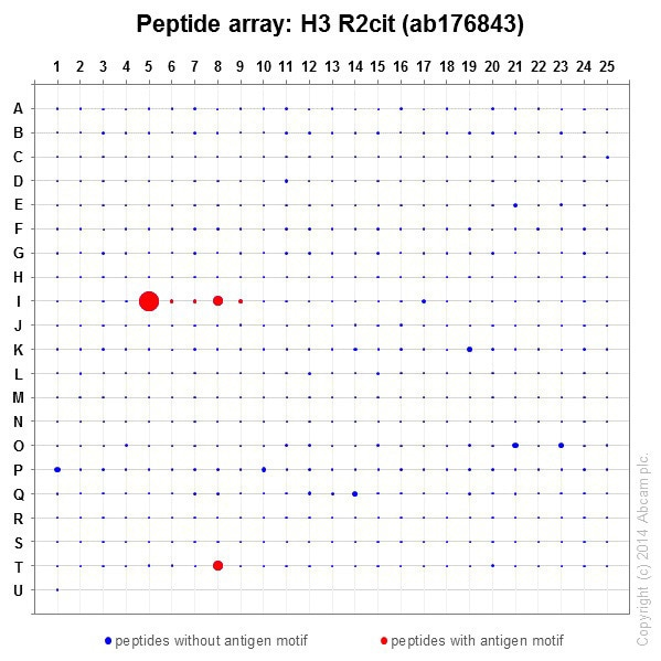 Peptide Array - Anti-Histone H3 (citrulline R2) antibody [EPR17703] (ab176843)