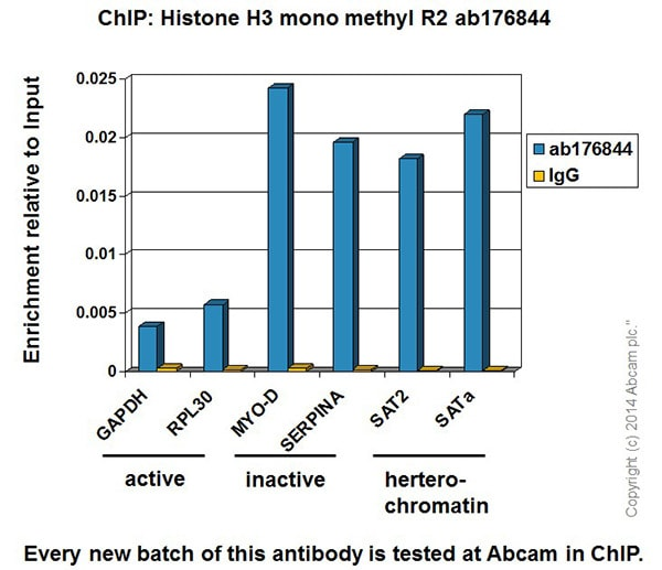 ChIP - Anti-Histone H3 (mono methyl R2) antibody [EPR17704] - ChIP Grade (ab176844)