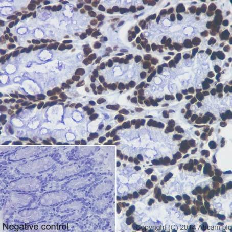 Immunohistochemistry (Formalin/PFA-fixed paraffin-embedded sections) - Anti-Histone H3 (mono methyl K4) antibody [ERP16597] - ChIP Grade (ab176877)