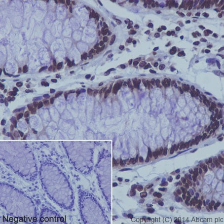 Immunohistochemistry (Formalin/PFA-fixed paraffin-embedded sections) - Anti-Histone H3 (mono methyl K9) antibody [EPR16989] - ChIP Grade (ab176880)