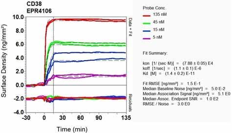 Other - Anti-CD38 antibody [EPR4106] - Low endotoxin, Azide free (ab176886)